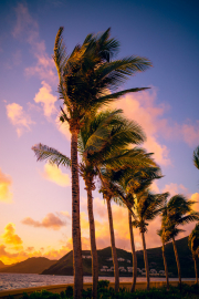 St-Kitts-Marriott-Atlantic-Ocean-Palm-Tree-Sunrise-04Jan2018_8217_web-size