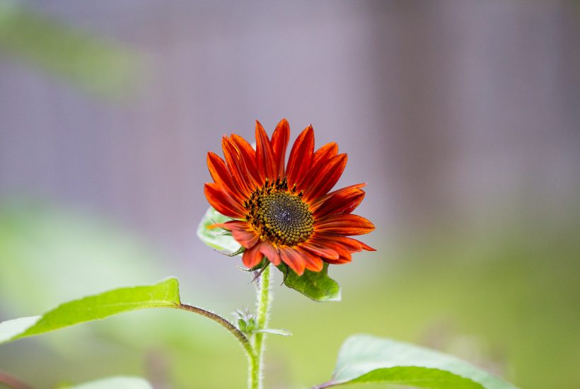 Planted Flower Farm - Rachel Carter Images - Aperture