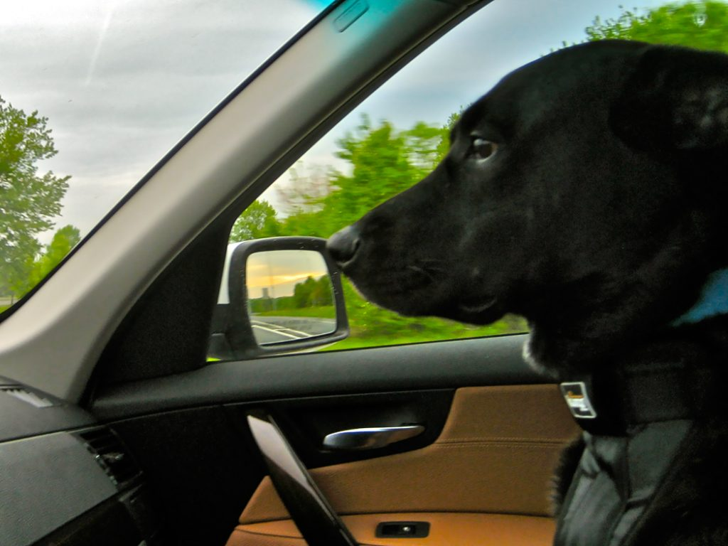 Chase the Co-Pilot