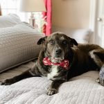 Chase Carter - Rachel Carter Images - black lab rescue mix dog
